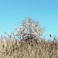 albero_small