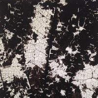 foglie_small