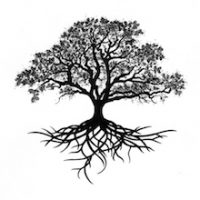 Tree Drawing With Roots Oak Tree Drawing Oak Tree Roots Related Keywords Amp Suggestions - Kids Drawing